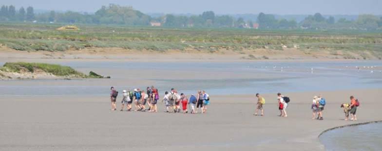 Baie de Somme est un petit coin de paradis pour les amateurs de nature.