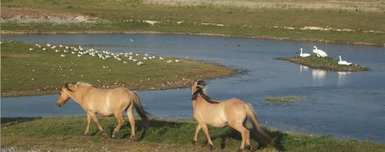 Parc ornithologique du Marquenterre dans la Baie de Somme